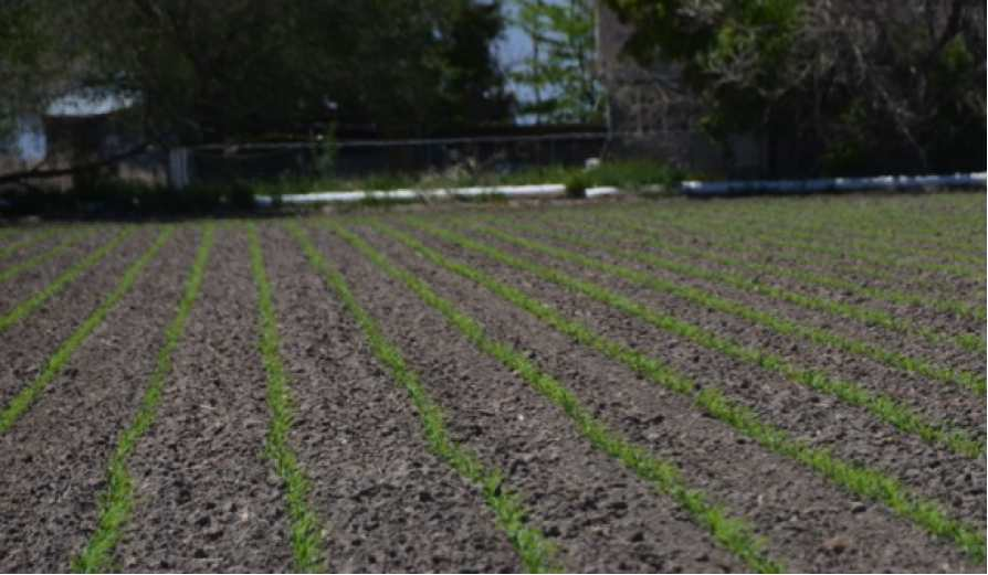 5 Ways to Ensure the Best Crop Stand and Production