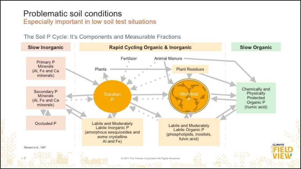 How to Effectively Manage Phosphorus Levels in the Soil